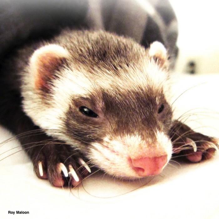 Heatstroke in Exotic Companion Mammals | LafeberVet