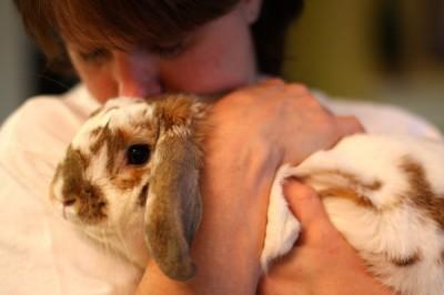Bunny cuddle Alex FCC