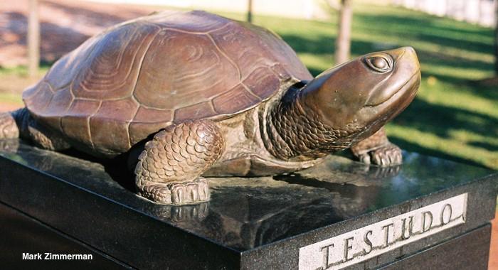 Basic Information Sheet: Mediterranean Tortoises | LafeberVet