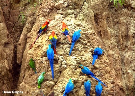 Macaw ID slideshow