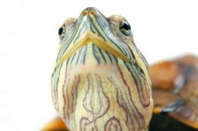 ca de reptiles se centra en la exploración física y las técnicas básicas como la atención de apoyo