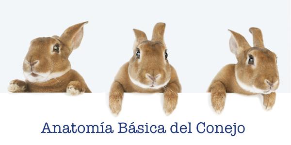 Anatomic Basica del Conejo