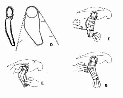 Las férulas de Thomas-Schroeder modificadas se hacen generalmente para aves medianas y grandes superiores a los 300 gramos