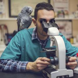veterinarian w parrot microscope