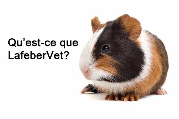 Qu'est-ce que LafeberVet?