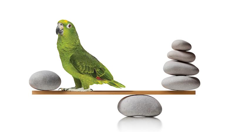 balancing stones bird