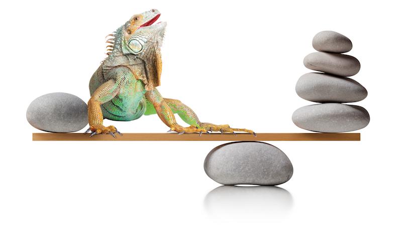 balancing stones reptile