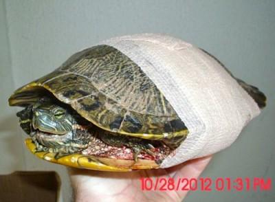Bandaged shell fracture