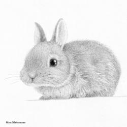 rabbit drawing gina matarazzo cropped square