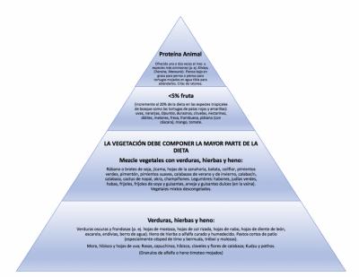 Recomendaciones para la alimentación de tortugas hospitalizadas mostrando las proporciones recomendadas de la dieta