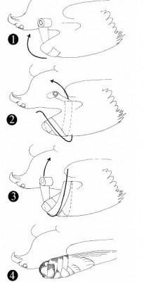 figure-of-eight-wrap-diagram