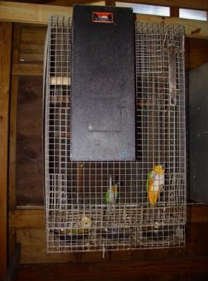hanging cage Rivera