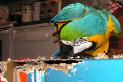 macaw cereal box Richard FCC
