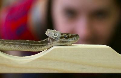 Snake shed beginning-Jaymis