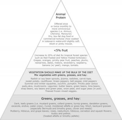 Tortoise food pyramid