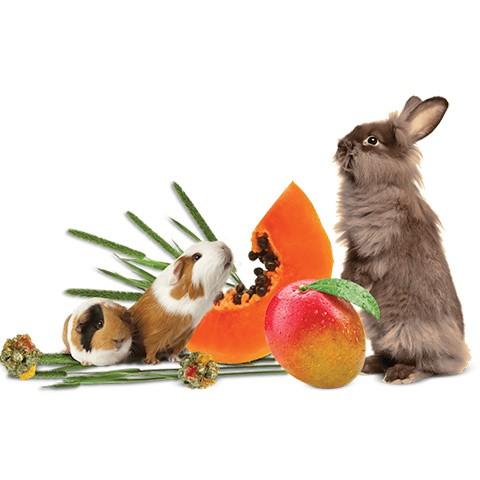 Small Mammal Food