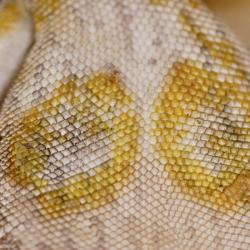 yellow fungus Crossland
