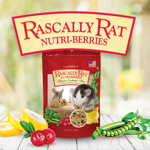 Rascally Rat