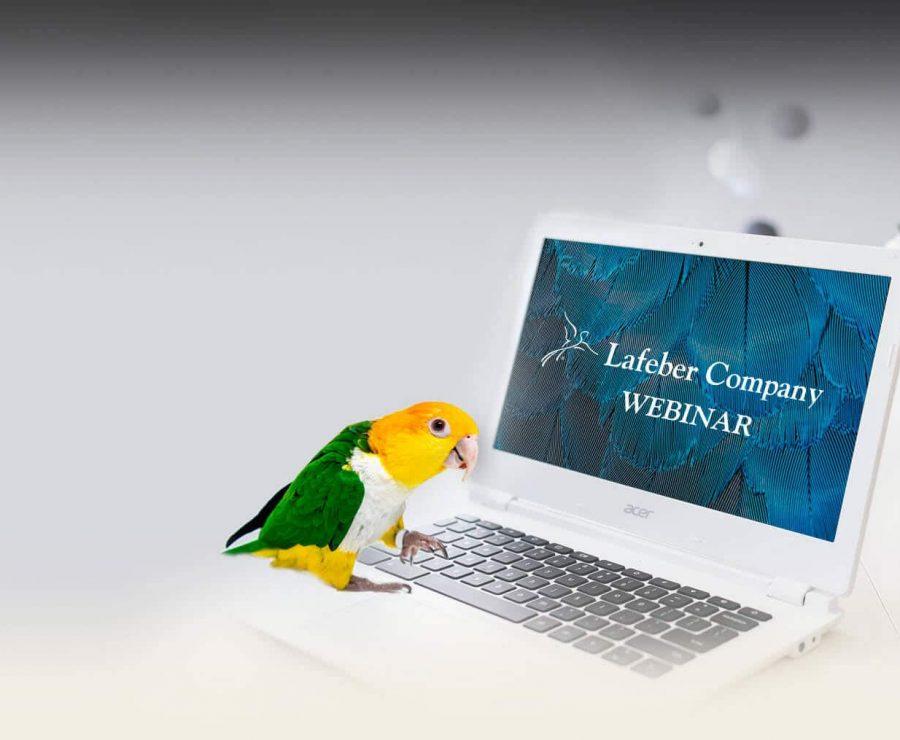 Lafeber Webinars